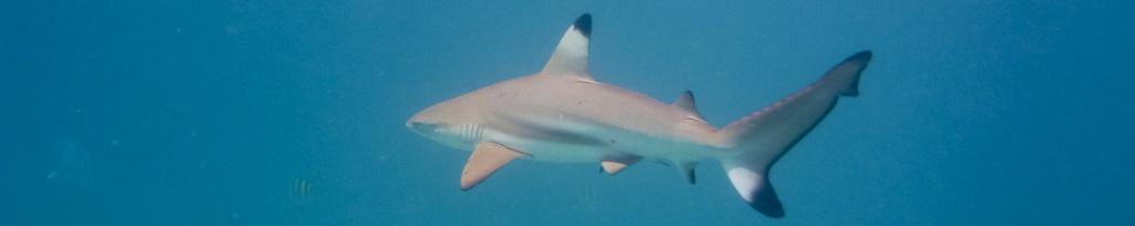 panorama snorkeling rekin