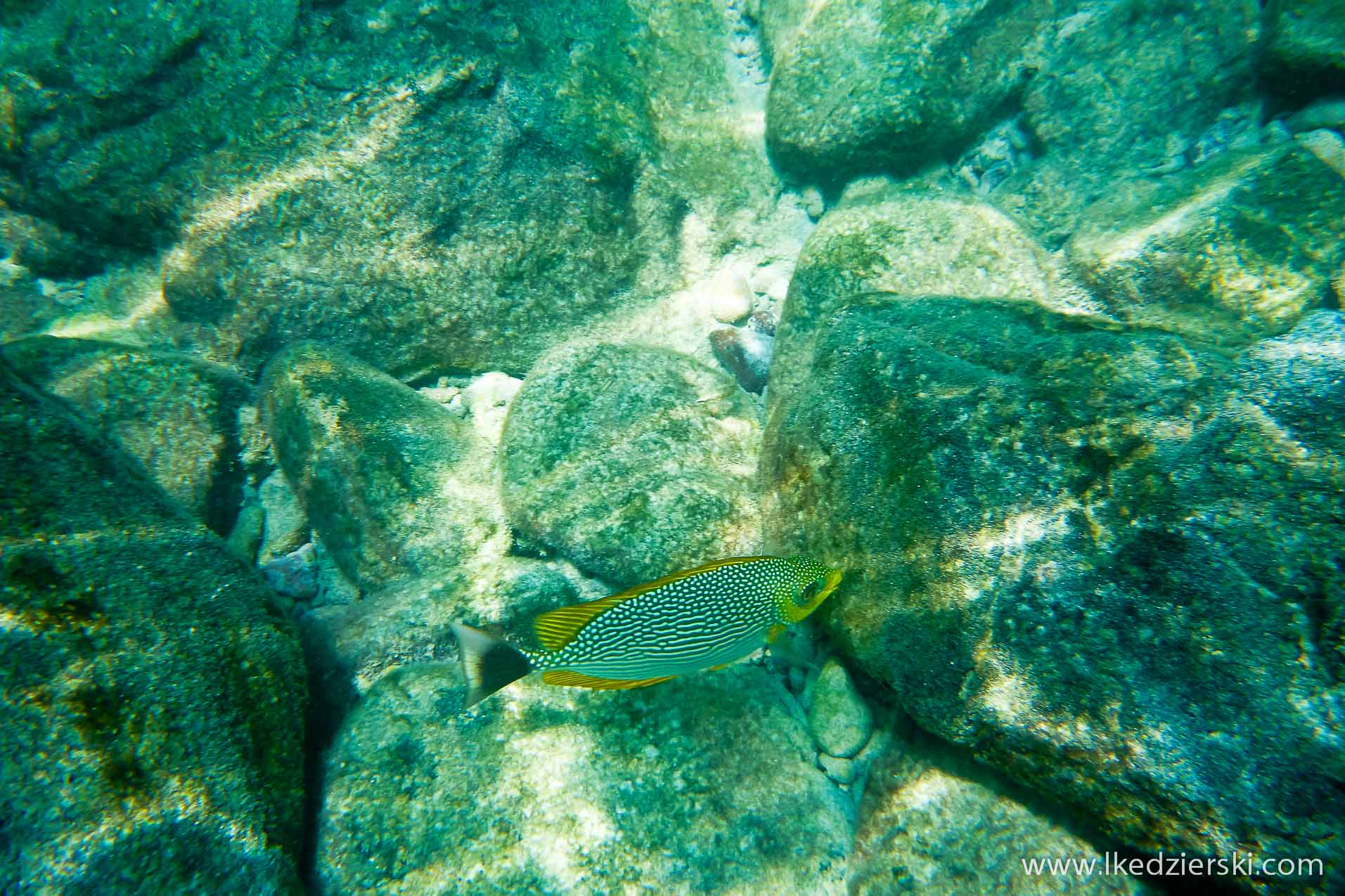 snorkeling na langkawi pulau payar