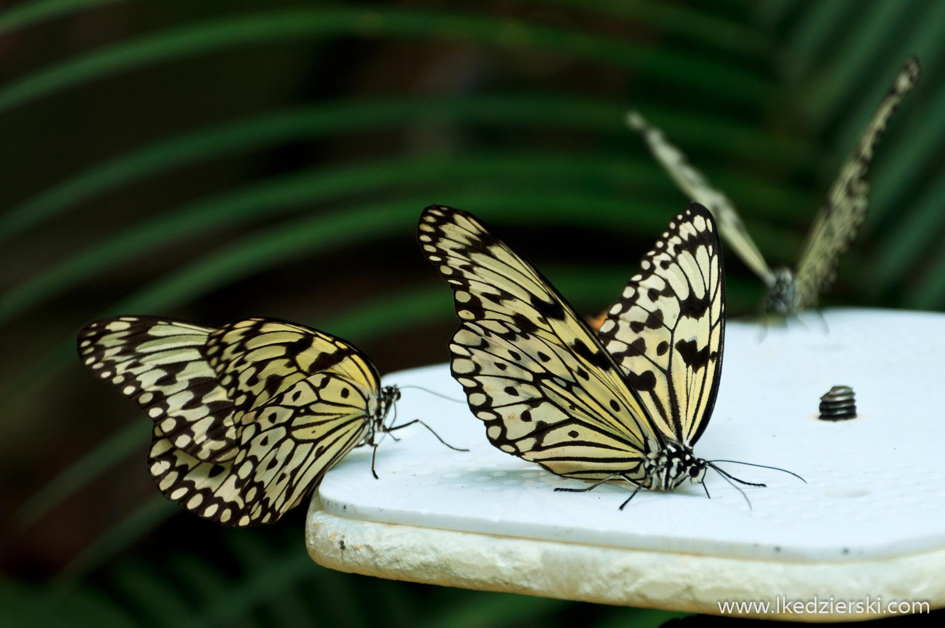 zoo w singapurze motyle