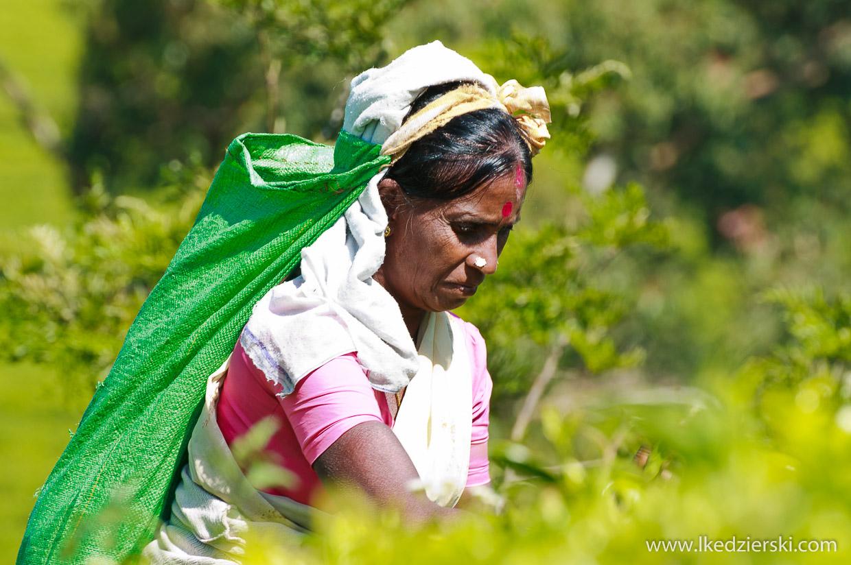 sri lanka tamilki zbieranie herbaty