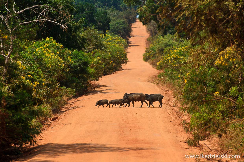 Yala Sri Lanka  City new picture : Co warto zobaczyć na Sri Lance lista top 10 miejsc