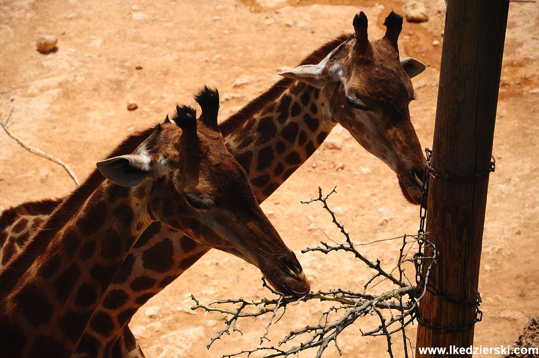 jerozolima zoo
