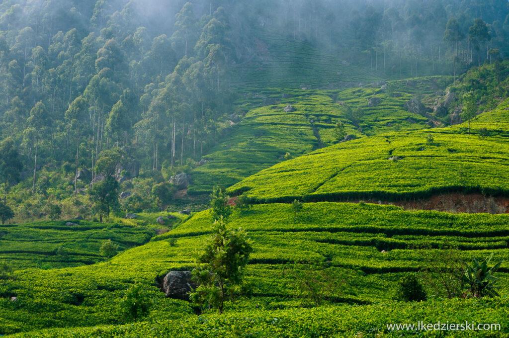 sri lanka plantacje herbaty lipton's seat
