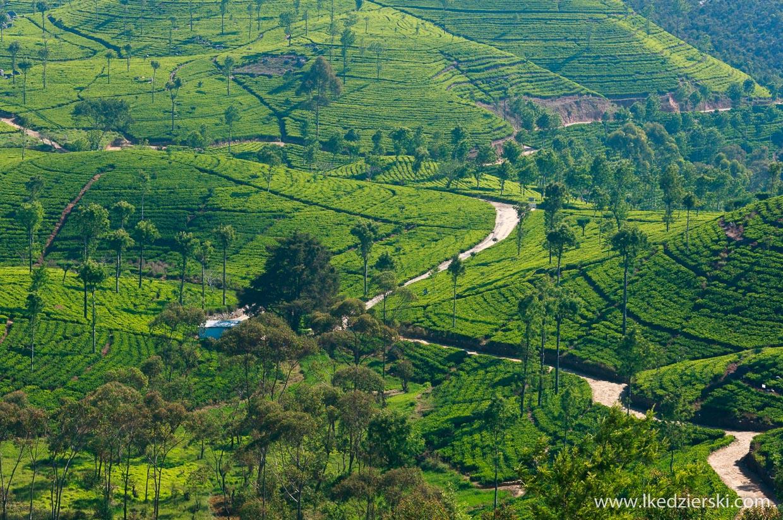 sri lanka najpiękniejsze plantacje herbaty lipton's seat