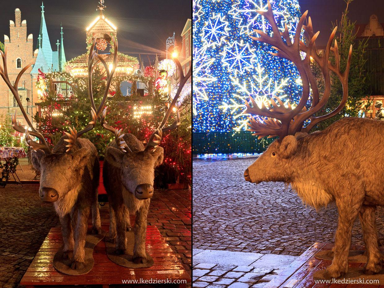 wrocław jarmark bożonarodzeniowy renifer