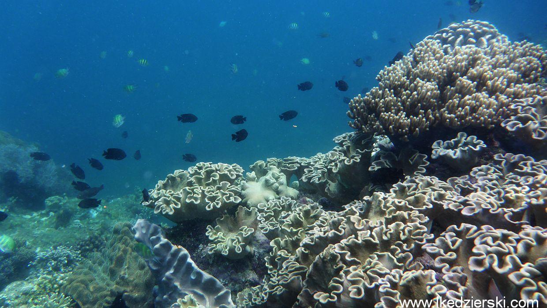 Apo Island - snorkeling.