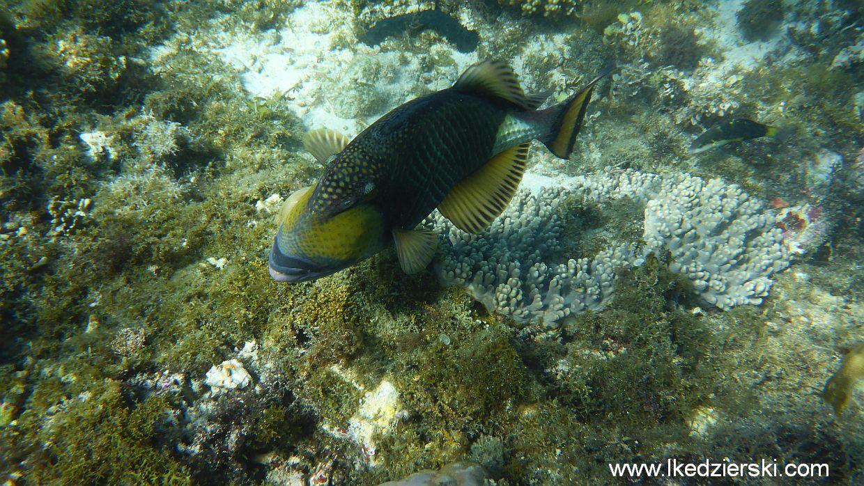 apo-island-snorkeling
