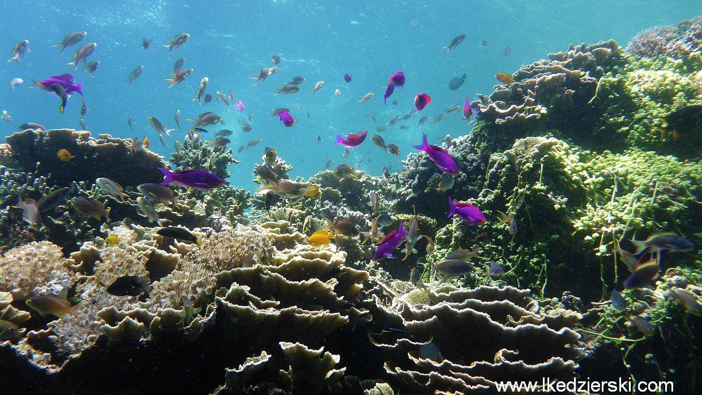 balicasag diving fish