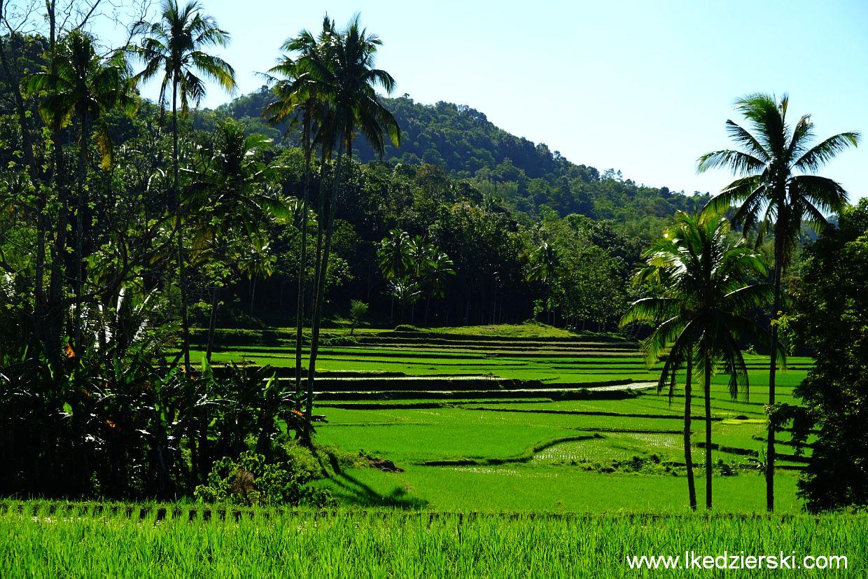 bohol pola ryżowe