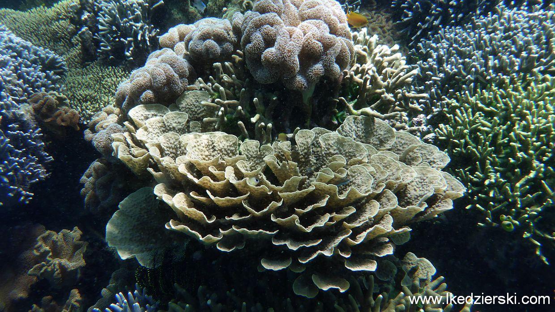filipiny pamilacan snorkeling