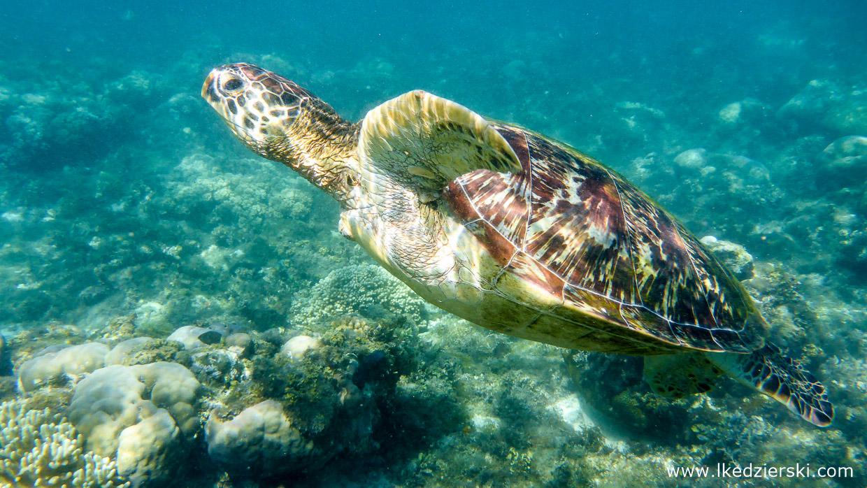 snorkeling na filipinach apo island turtle