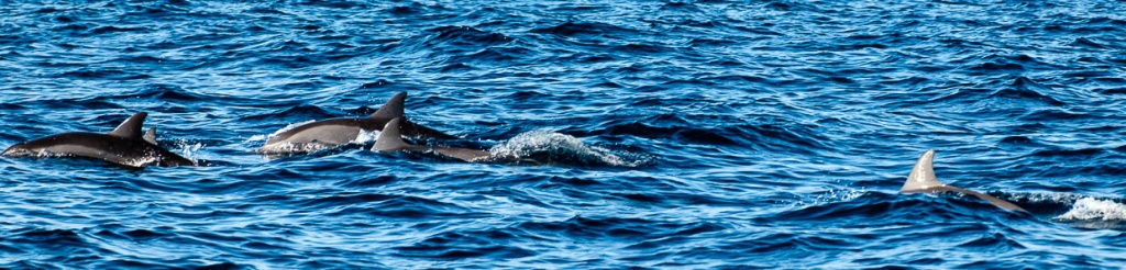 panorama dolphin watching