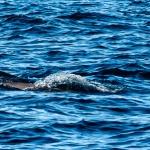 Spotkanie z delfinami na Pamilacanie