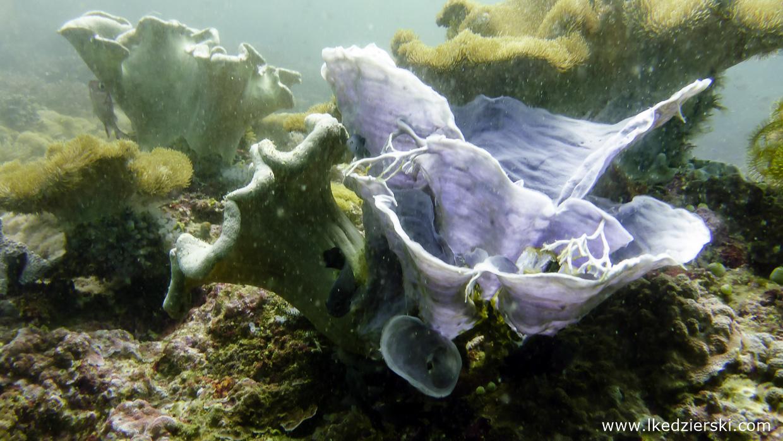 nurkowanie na filipinach rafa koralowa apo island diving philippines
