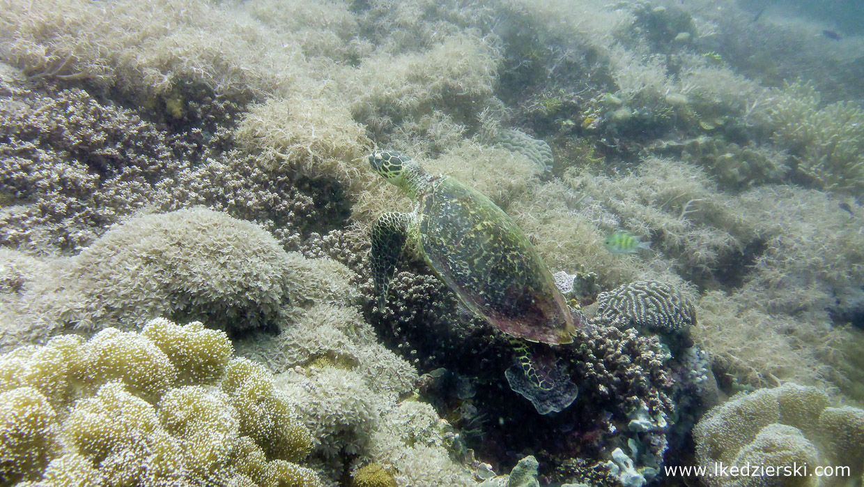 filipiny nurkowanie apo island diving philippines