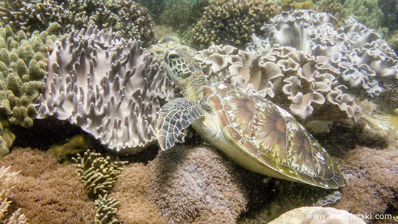 filipiny nurkowanie apo island diving philippines rafa koralowa