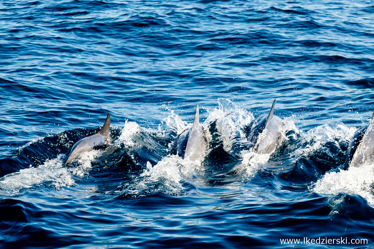 filipiny pamilacan dolphin watching delfiny