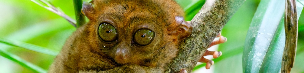 panorama filipiny bohol tarsier