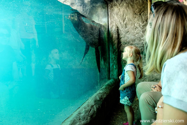 opole na weekend zoo w opolu