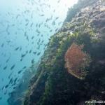 Nurkowanie w Chorwacji – wyspa Pag