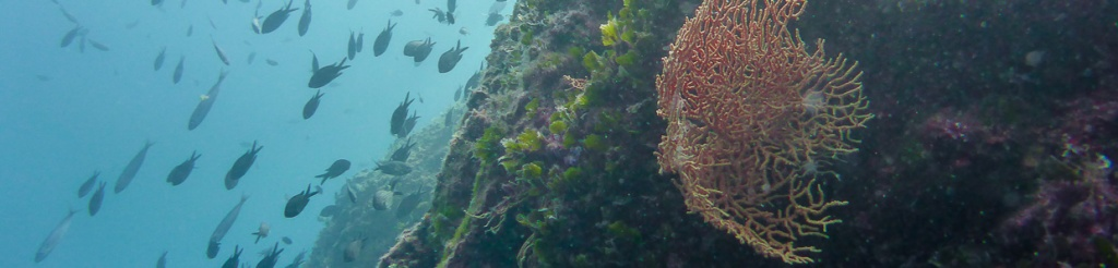 panorama nurkowanie chorwacja wyspa pag diving pag