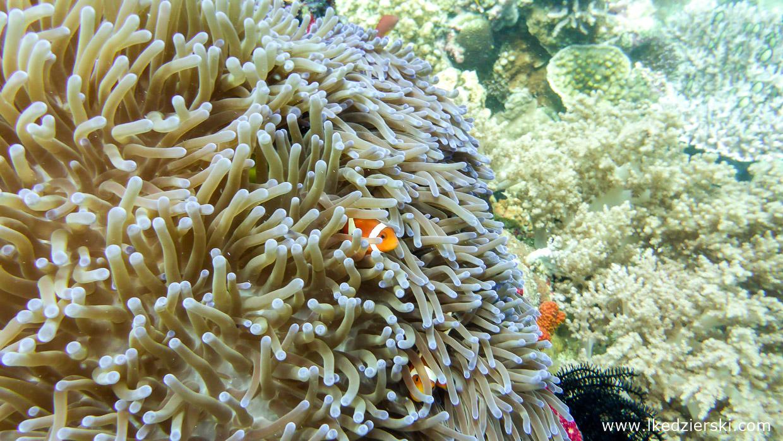 nurkowanie na filipinach balicasag diving philippines