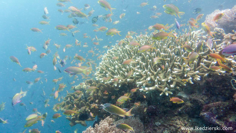 nurkowanie na filipinach balicasag diving philippines atrakcje filipin