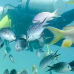 Nurkowanie na Filipinach – Balicasag