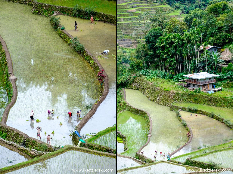 filipiny batad tarasy ryżowe rice fields luzon
