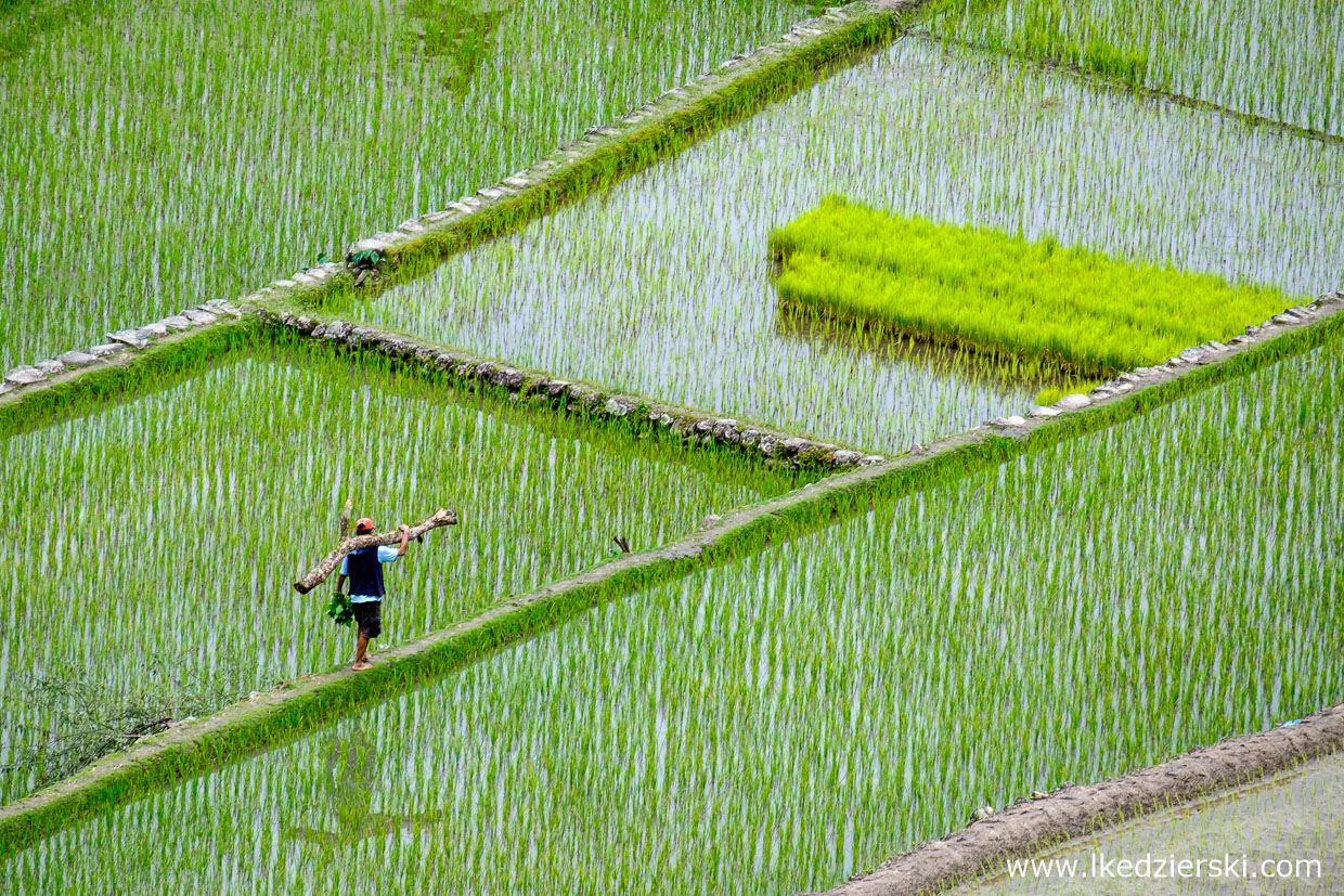 filipiny batad tarasy ryżowe rice fields luzon