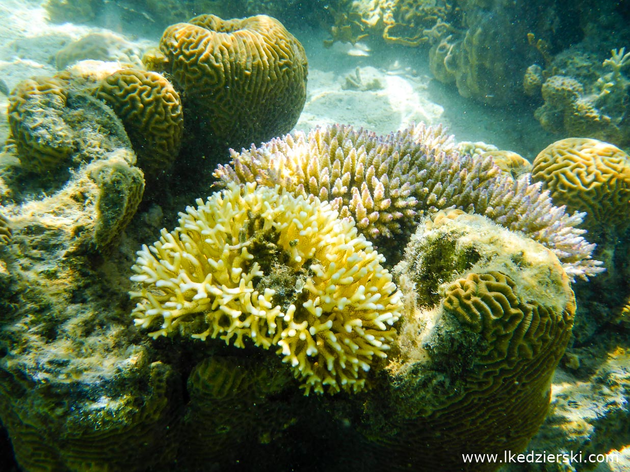 filipiny coron tour a la islas de coral snorkeling island hopping tour a