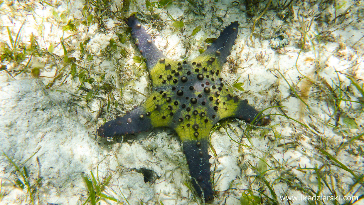 filipiny dumaluan beach snorkeling starfish philippines