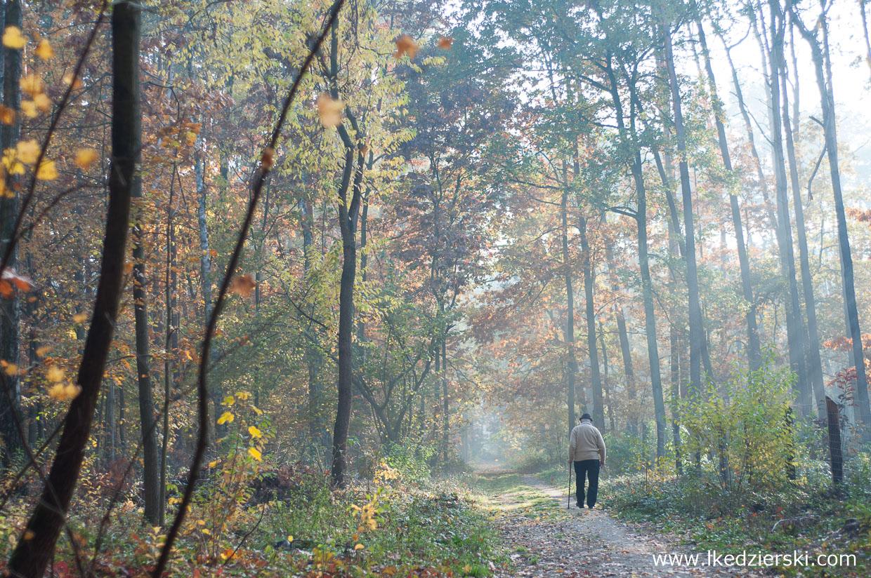 kleszcze spacer w lesie