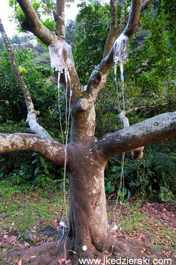 drzewo z kroplówką
