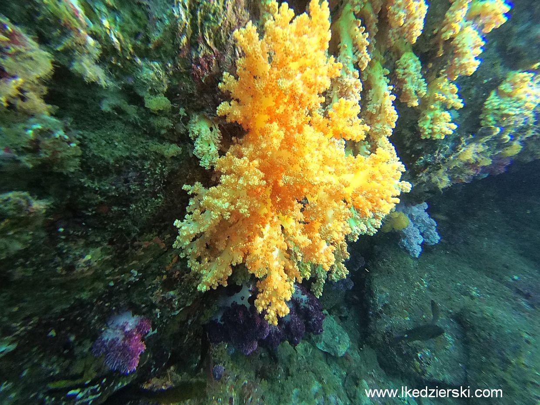 korea południowa wyspa jeju nurkowanie