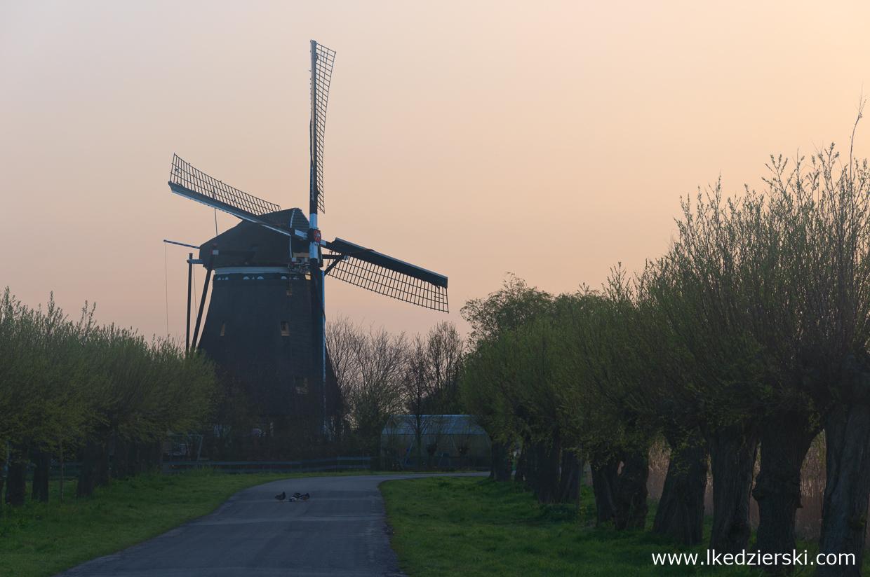 holandia atrakcje wiatrak atrakcje holandii