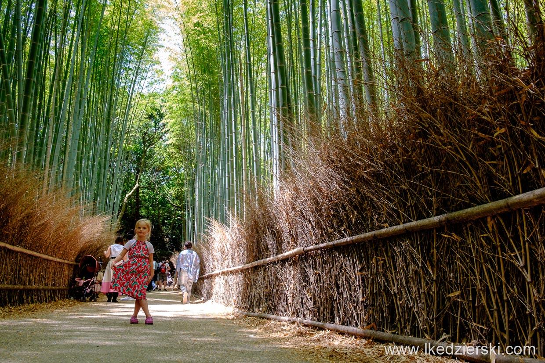 japonia kioto arashiyama bamboo grove lasek bambusowy