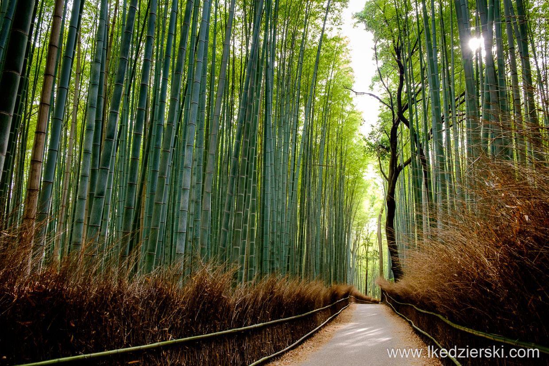 japonia kioto arashiyama bamboo grove lasek bambusowy japonia informacje praktyczne