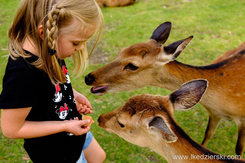 japonia nara jelonki deer