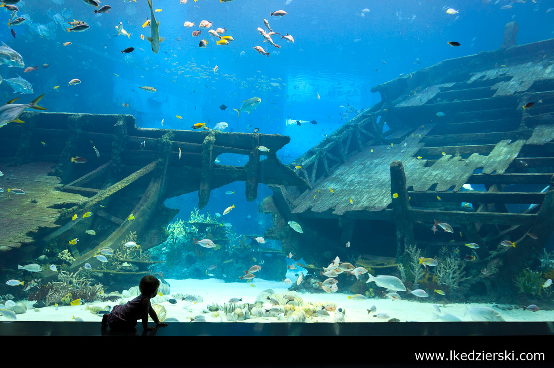 singapur atrakcje atrakcje singapuru S.E.A. Aquarium akwarium
