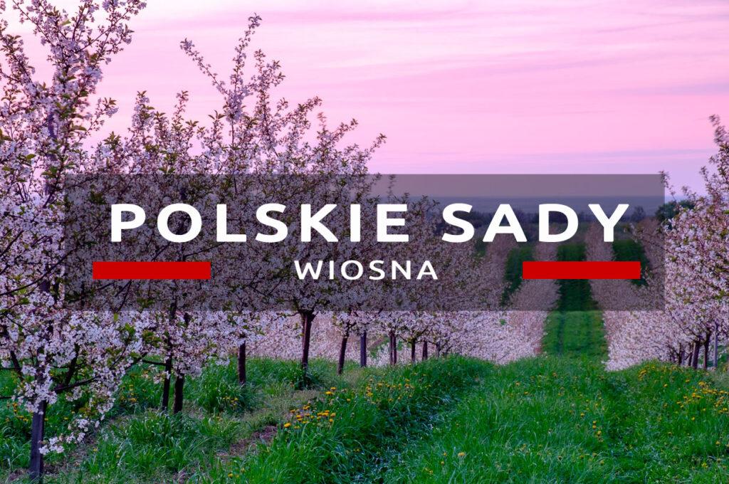 trzebnica polskie sady zachód słońca