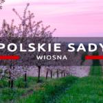Polskie sady o zachodzie słońca