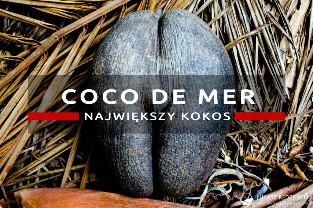 coco de mer największy kokos seszele praslin Fond Ferdinand Nature Reserve