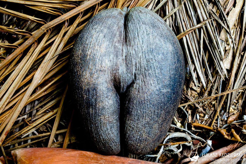 coco de mer największy kokos seszele praslin Fond Ferdinand Nature Reserve Lodoicja seszelska