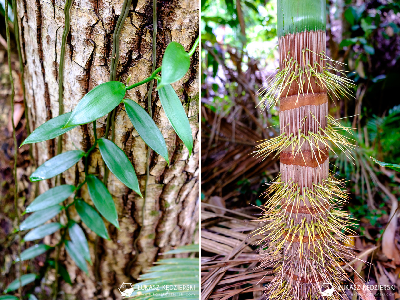 fond ferdinand nature reserve seszele seychelles coco de mer