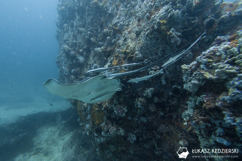 nurkowanie na seszelach diving seychelles mahe praslin