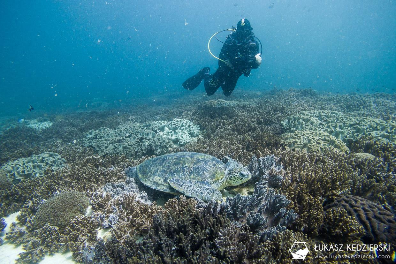 nurkowanie w omanie oman diving as sifah