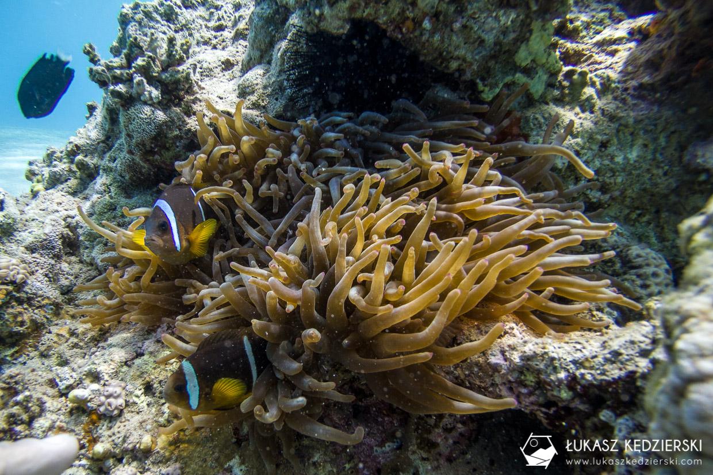 nurkowanie jordania akaba nurkowanie w jordanii jordan diving