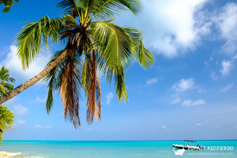 malediwy palma plaża