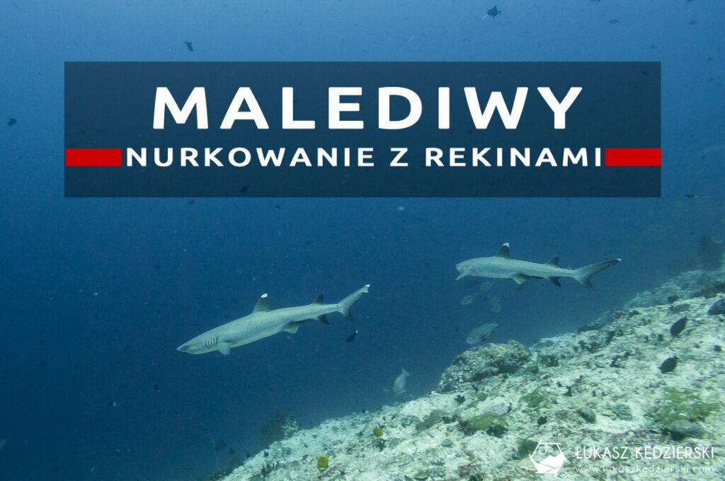 nurkowanie z rekinami na malediwach malediwy nurkowanie rekiny